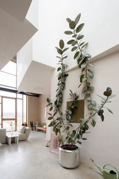 House of the artists Joris Brouwers & Nicky Zwaan. Via freundevonfreunden.com. #plant #simplicity