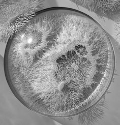 Outbreak: Hand Cut Paper Microbes and Pathogens by Rogan Brown sculpture science paper germs #sculpture #white #design #black #microbe #pathogen #disease #photography #art #and #paper