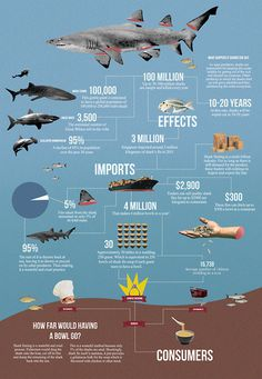 Shark Finning infographics