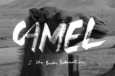 Camel #white #custom #black #drawn #and #type #hand #typography