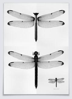 Illustrations - Isidro Ferrer Exhibit @Anatome Milano on Behance
