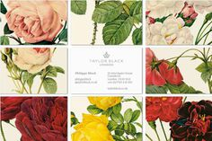 business card taylor london.jpg (570×380) #taylor #business #branding #colorful #vintage #cards #flowers