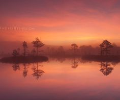 Nature Photography by Andrei Reinol #inspiration #photography #nature