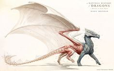 Musculature of a Greater Dragon by Todd Lockwood #muscle #dragon #fantasy #anatomy #illustration #musculature #myth
