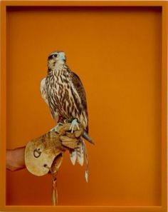 NNW #lassry #elad #of #bird #photography #falcon #prey