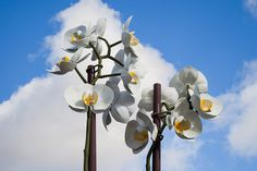 Two Orchids Herald the Entrance to Central Park in New York