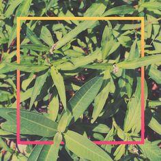 . #plants #print #design #graphic #green