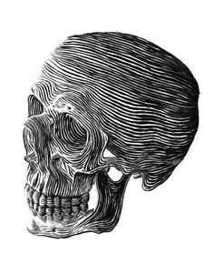 Skull - Ross McCampbell #skeleton #white #ink #head #black #illustration #and #skull #bones #drawing #sketch