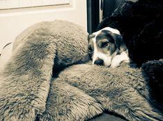 Wall Photos #zzz #stuff #relax #sleep #jack #snooze #animal #pet #dog