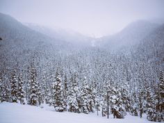 field of dreams. #photography #winter #snow #landscape #trees #mountains #canada #evergreens