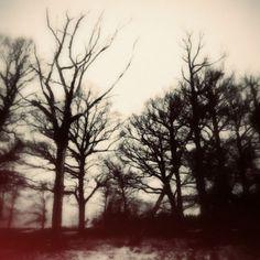 MÖRKERTRÄD – « DANIEL JOURNAL #photography #trees