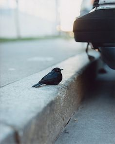 gregory halpern 04 #photography #bird