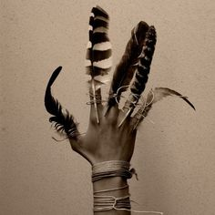 +++wolf+willow+++ #old #feathers #photography #art #hand