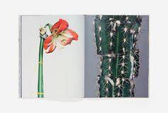 Bownik Disassembly #photography #plants #cactus