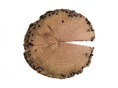 Riba_Briccole-Thun_7.jpg 560×420 pixels #thun #riba #wood #1920 #table #matteo