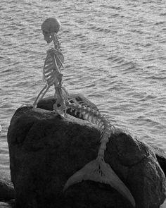 Dead Mermaid #skeleton #mermaid