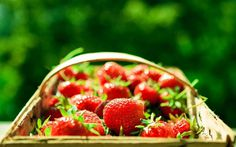 Strawberries Bokeh