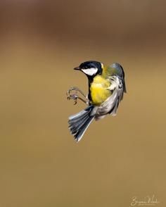 #birdlife: Beautiful Bird Photography by Benjamin Wende