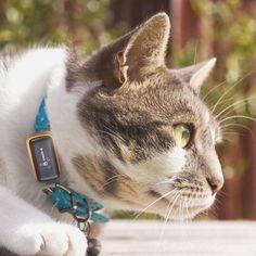 G-Paws Pet GPS Tracker #tech #flow #gadget #gift #ideas #cool