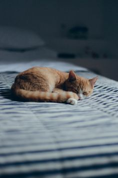 Tumblr #kitten #sleep #bliss #photography #light