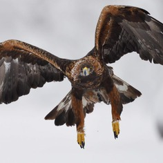 #kings_birds: Fascinating Bird Photography by Staffan Widstrand