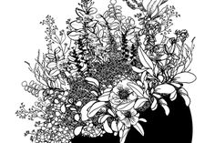#Illustration #drawing #plants