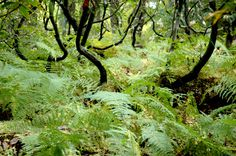 Photography #hike #woods #fern #forest #green