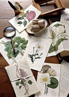 Likes | Tumblr #flower #wood #illustration