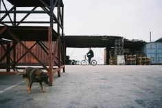 Amanda Kho #photography #character #bike #dog