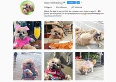 @Marniethedog - Over 2,1 millions followers