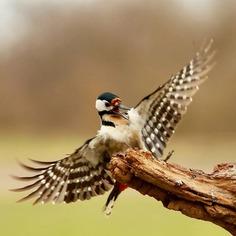 #birdfreaks: Stunning Bird Photography by Kotics Zsolt