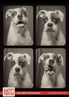dogs in photo booths by lynn terry