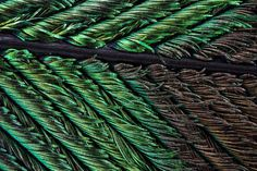 peacock feather detail photography macro beautiful colors design inspiration www.mindsparklemag.com