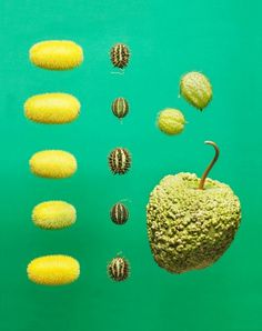 food photography maren caruso 5 #ingredients #photography #conceptual #food