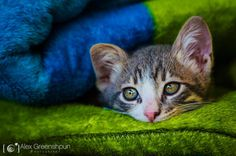 Alex Greenshpun #inspiration #photography #animal