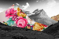 Guy Catling | PICDIT #photo #design #photography #art #flower #collage