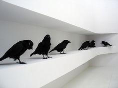 tumblr_l5b8oa5RiR1qzs56do1_500.jpg (500×375) #crows