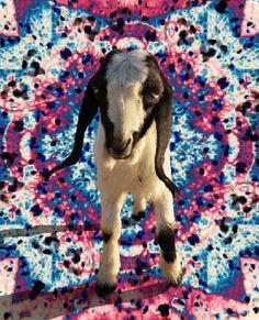 #gif #goat #inspiration #lysergic