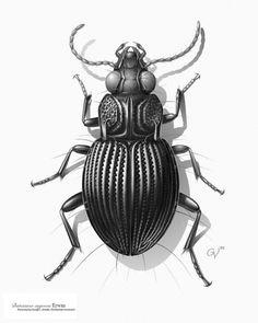 Google Reader (1000+) #bug