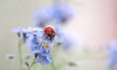 Flowers of Russia: Wonderful Flowers Photography by Vladimir Kniazev