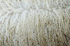 wool #wool #sheep #white