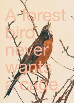 #Poster #bird #forest #branches #cage #quote