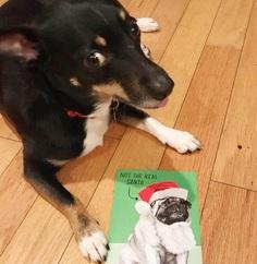 Most Dog Friendly Stores in America - Hallmark