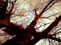 alvéolos #photography #tree