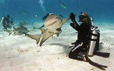 Smiling Shark Gives High-Five! - My Modern Metropolis #smiling #underwater #shark #smile #five #swim #high #epic