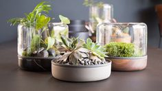 Botanica, an Australian company, made a product called Sanctuary M to hold botanicals in a modular desktop terrarium. The environments of th
