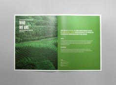 Avocado Zapotlan Brochure #brochure #editorial #mexico #avocado #mno