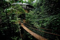 CJWHO ™ (finca bellavista: a sustainable treehouse...) #house #tree #costa #design #landscape #photography #architecture #rica