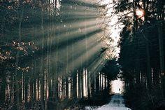 der wald. | Flickr - Photo Sharing! #fog #running #sunlight #morning #forest