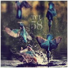 The Collective Loop Playlist-58 Cover Art #playlist #hummingbirds #tcl #nature #cdcoverart #coverart